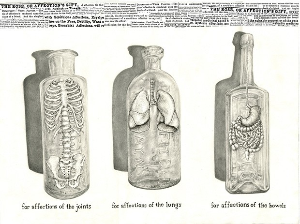 a graphite on paper illustration of three bottles. One contains a small spinal chord, vertebrae, and pelvis; the second contains a pair of lungs; the third contains a stomach and intestines.