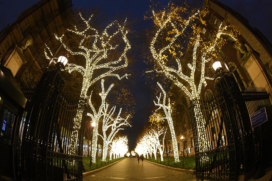 A view down College Walk looking up at trees covered in white holiday lights.