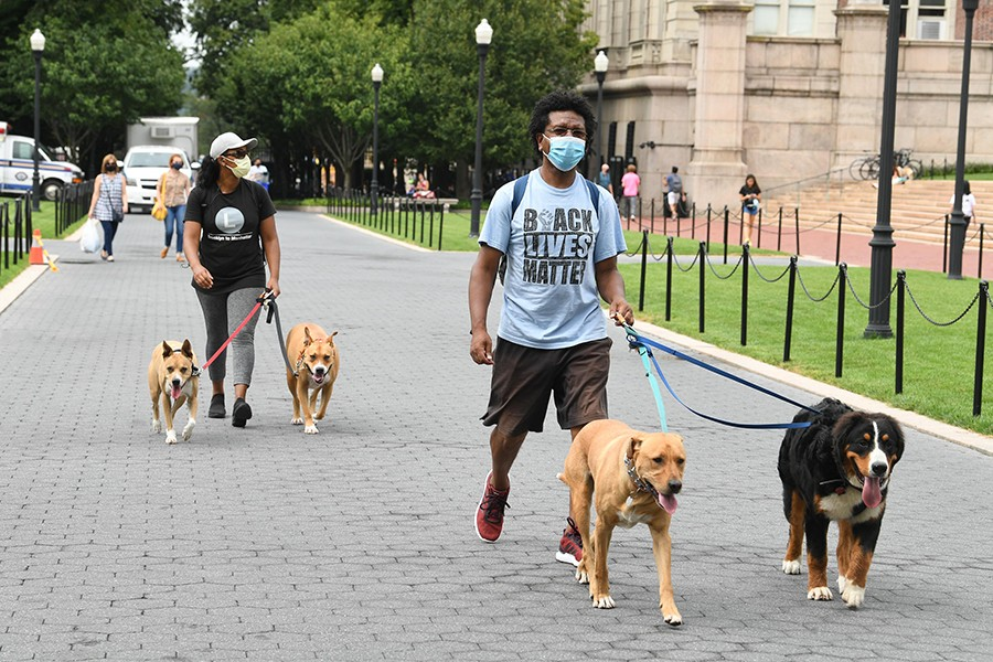 Two people walking two dogs each, one wearing a Black Lives Matter t-shirt, cross Columbia's Morningside campus.