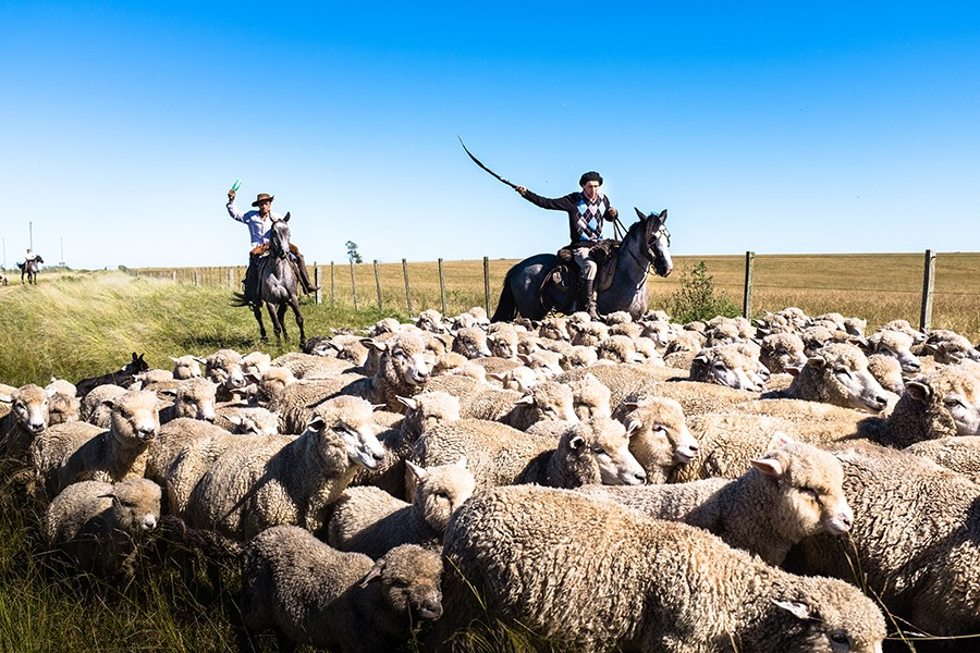 Two shepherds ride horses to usher a group of sheep along a pasture with a backdrop of clear blue sky.