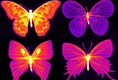 Four bright orange, pink and purple butterflies - two on two rows