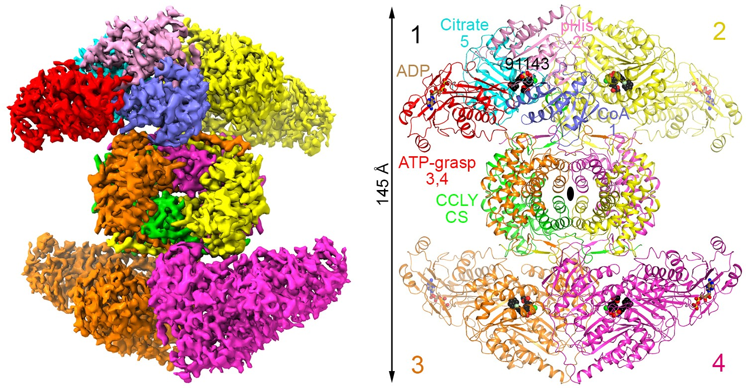 Scientists Decipher 3D Structure of a Promising Molecular