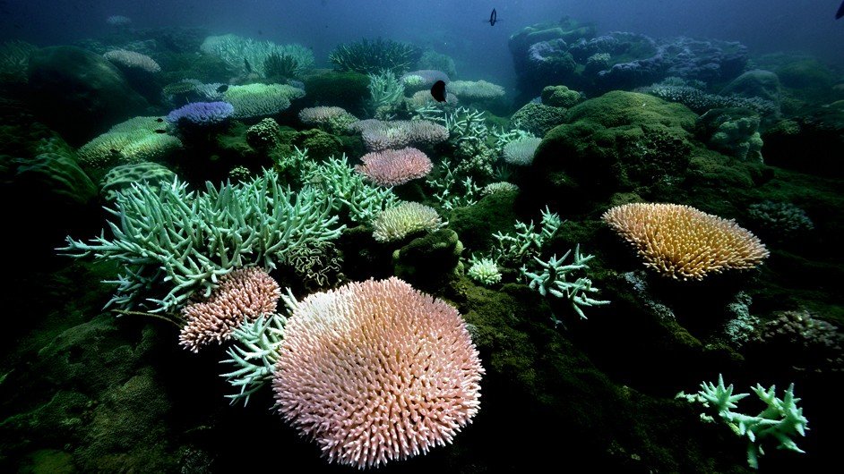 blue sea water as a backdrop for pink and gold coral surrounded by green algae
